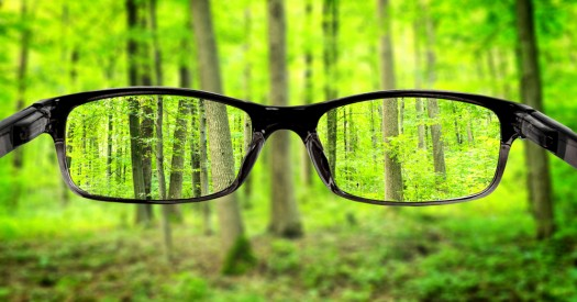 glasses in the forest